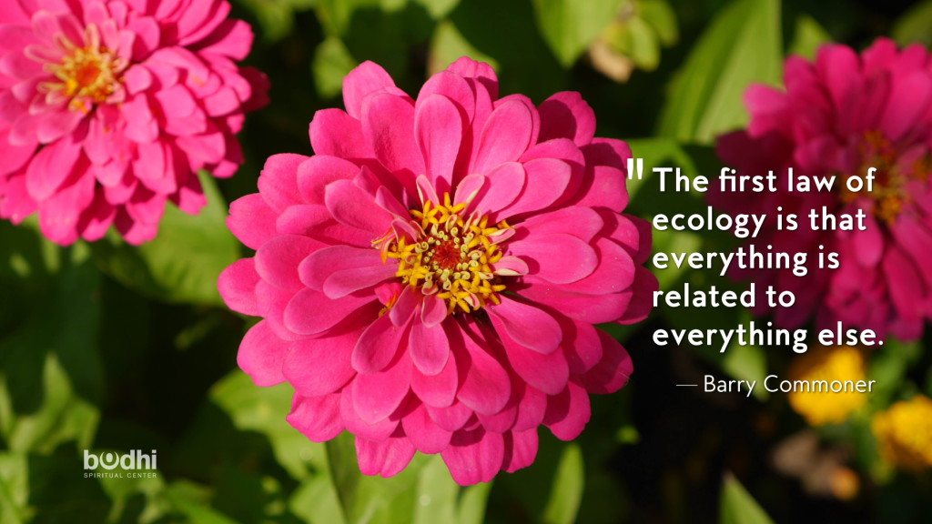 ecology quote from barry commoner - 04.08.15 - 1800