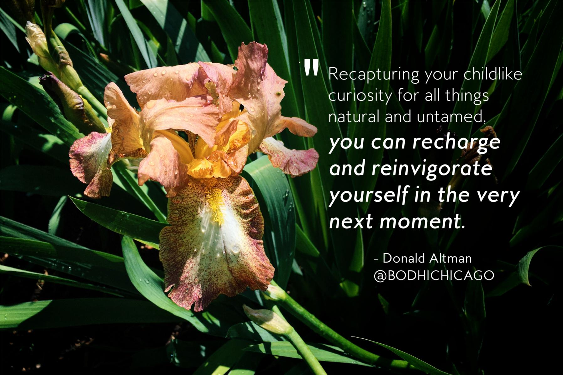 Wednesday Wisdom Quote: Donald Altman On Recharging And Reinvigorating
